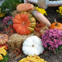 Pumpkins and Gourds (Photo: Margarita Persico)