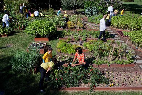 White House Organic Garden